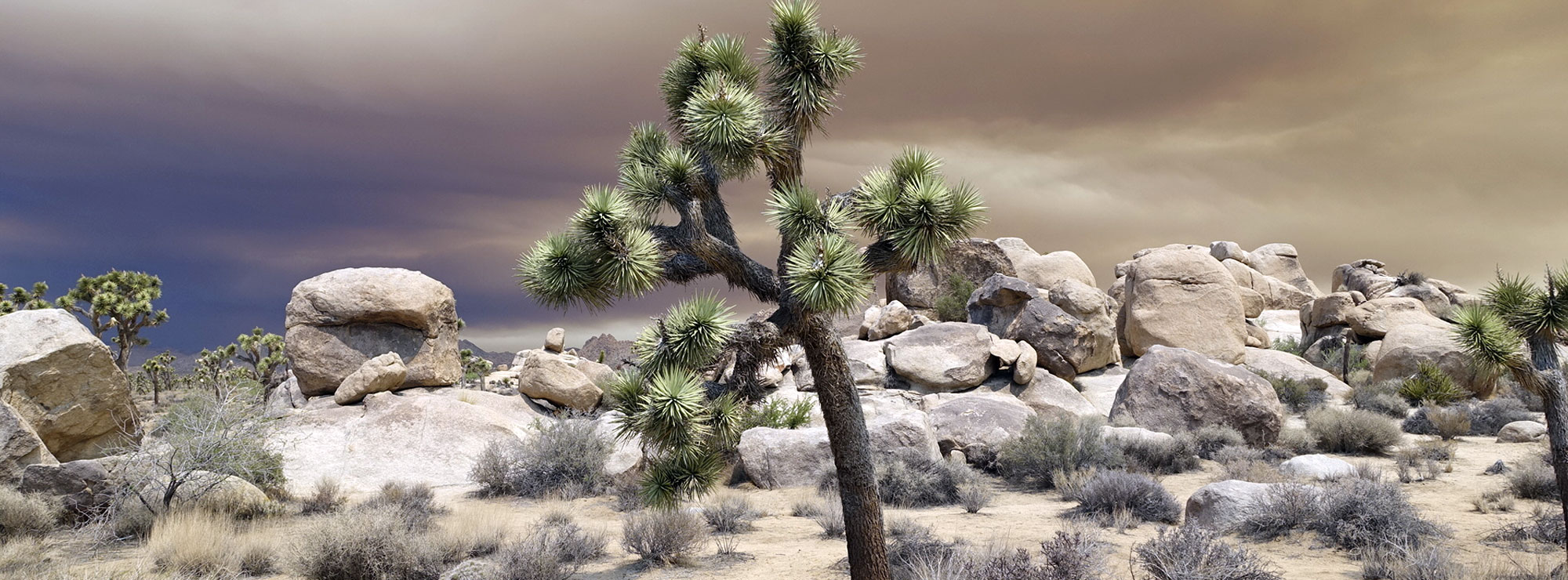 Joshua tree sustainability